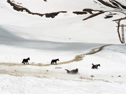 Horses down the slope 3